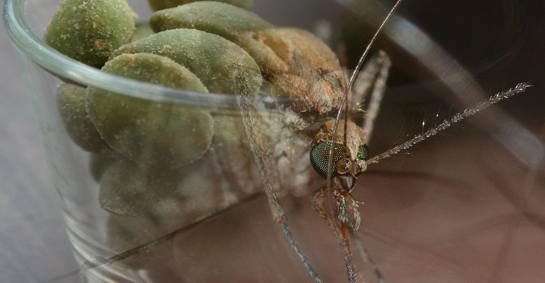 Hausmittel gegen Mückenstiche. Mückenstiche behandeln.