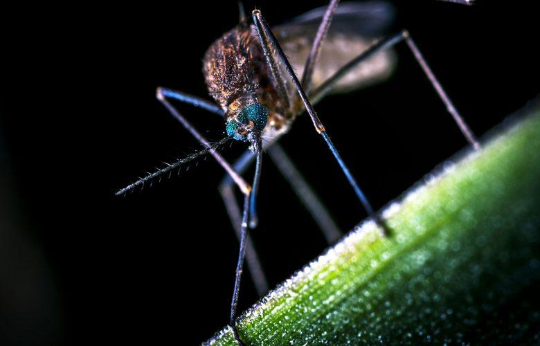 Wie kann man Mückenstiche behandeln?