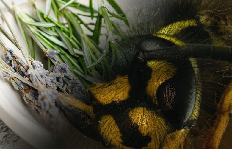 Hausmittel gegen Wespenstiche gegen Schwellung und Juckreiz.