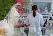 Hyaluronsäure Herstellung: tierisch, biotechnologisch und sogar im eigenen Körper.